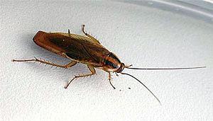 Купить отпугиватель тараканов
