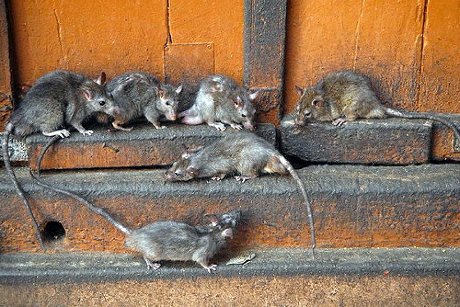 Рейтинг отпугивателей мышей