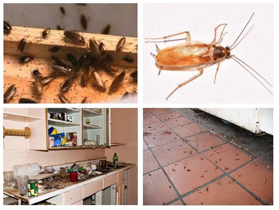 Как работают ультразвуковые отпугиватели тараканов