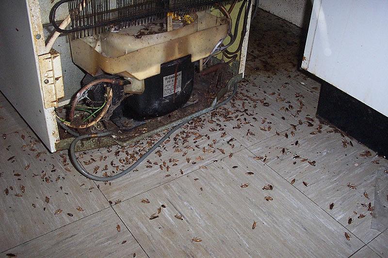 Оптимальный вариант – купить ультразвуковое устройство от тараканов.