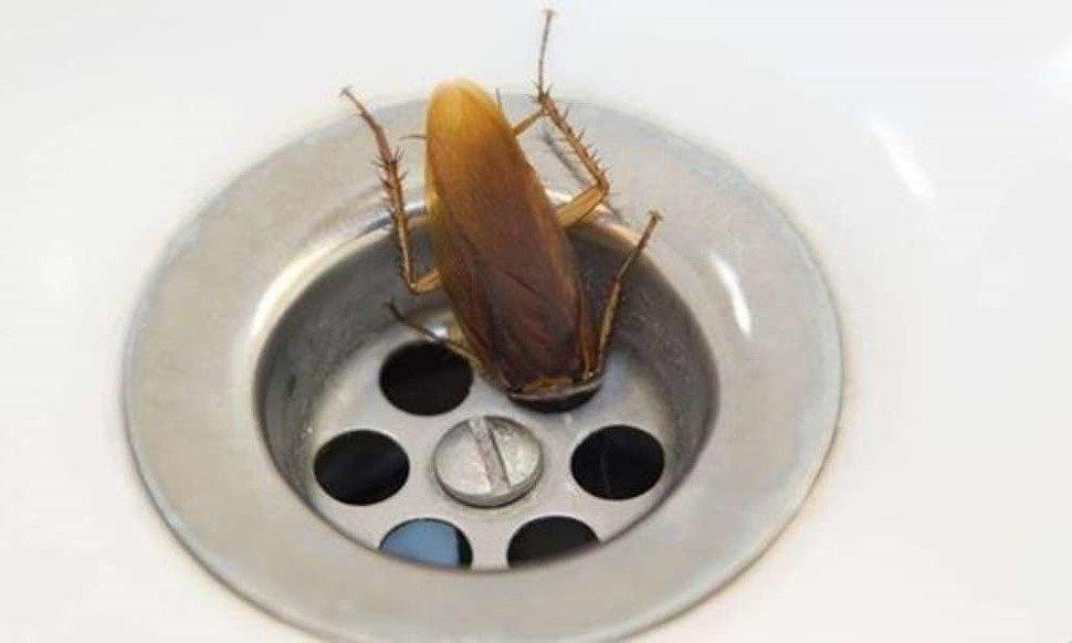 какой ультразвуковой отпугиватель тараканов лучше