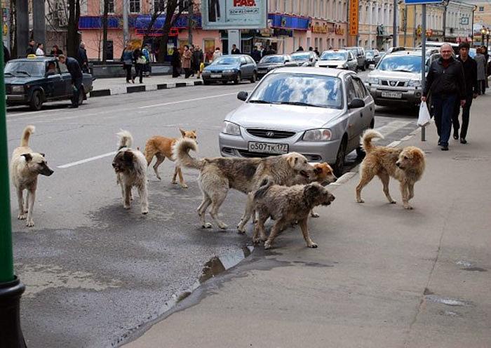 Какой отпугиватель собак купить