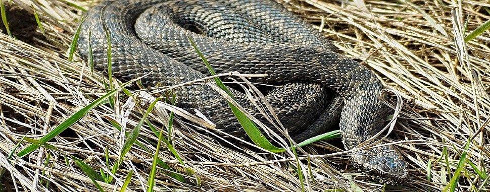 Чего боятся змеи
