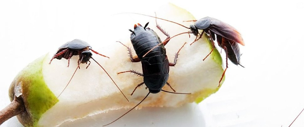 Что поможет от тараканов ?